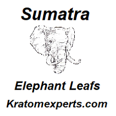 Sumatra Elephant Leafs - Starting at € 11,00 per 100 gram