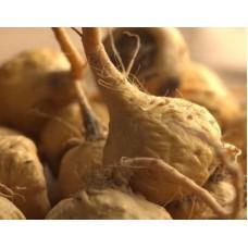 Maca (Lepidium meyenii) - 20x Extract - Starting at € 15,00 per 100 gram