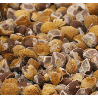 Hawaiian Baby Woodrose - Argyreia Nervosa - 25 Gram - Starting at € 10,-